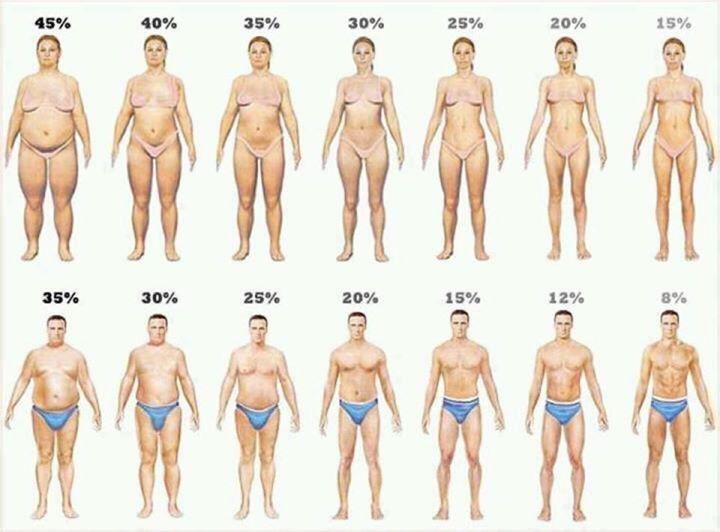 一目で分かる!あなたの体脂肪率!